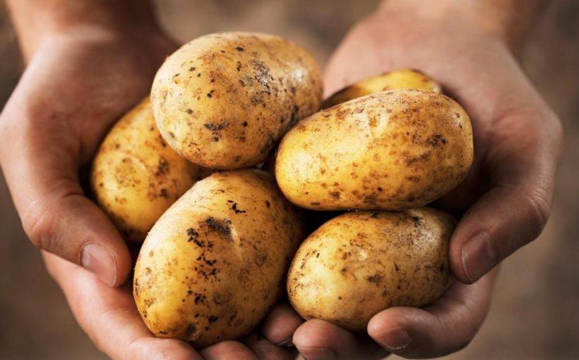 دراسة: البطاطا تحمي من تدهور الخلايا العصبية