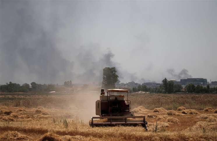 شُح الأمطار ومياه الأنهار يفقِد العراق 30% من محصولي القمح والشعير