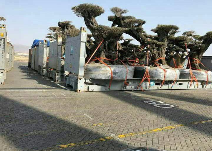 لـ مراهقي الإمارات:السرقة لا تصنع تأريخاً..!!