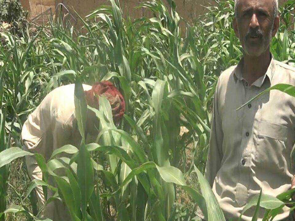 6f985b87a الزراعة: استراتيجية التنمية وخطوة مهمة لمواجهة العدوان والحصار.